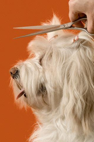 În pas cu moda: Câinii şi pisicile sucevenilor, la răsfăţ cu tratamente cosmetice