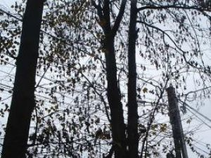 La Pojorâta  se execută lucrări de întărire a reţelelor electrice în zona Podirei