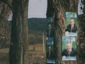 Afişe electorale fixate cu cuie pe copaci