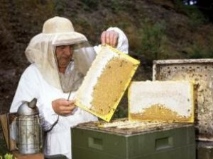 Date false: S-a raportat de două ori mai multă miere decât s-a produs
