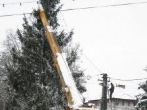 "Vasile Andriciuc: ""Zăpada care s-a aşezat a îngreunat bradul"""