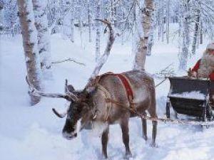 Afaceri de sezon: Moş Crăciun, găina cu ouă de aur a Finlandei