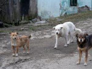Câinii maidanezi, o problemă pentru suceveni