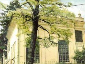 ZOOM IN EUROPA: Liliacul de la Sinagogă va înflori din nou