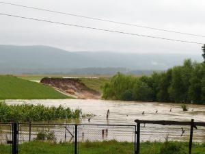 Iniţiativă: Europarlamentarul Cătălin Nechifor propune cultivarea orezului în locul grâului