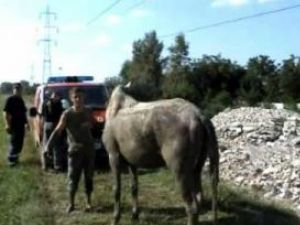 După aproape o oră, pompierii au reuşit să scoată calul la mal