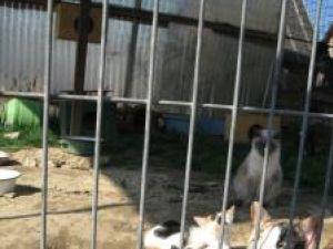 14 pisici au adăpostul amenajat alături de cele ale câinilor care mişună peste tot în jur