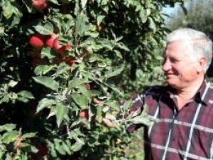 """Ion Florea: """"Mărul are o frumuseţe aparte. Mereu m-am ocupat de cultivarea lui şi nici nu aş putea face altceva"""""""