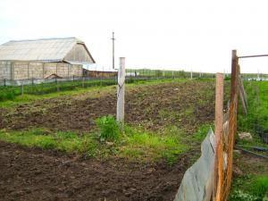 Creşterea melcilor, o afacere fără prea mare succes în judeţul Suceava