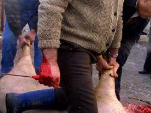 Până la sfârşitul acestui an nu se vor aplica amenzi celor care sacrifică porcii după tradiţie. Foto: MEDIAFAX