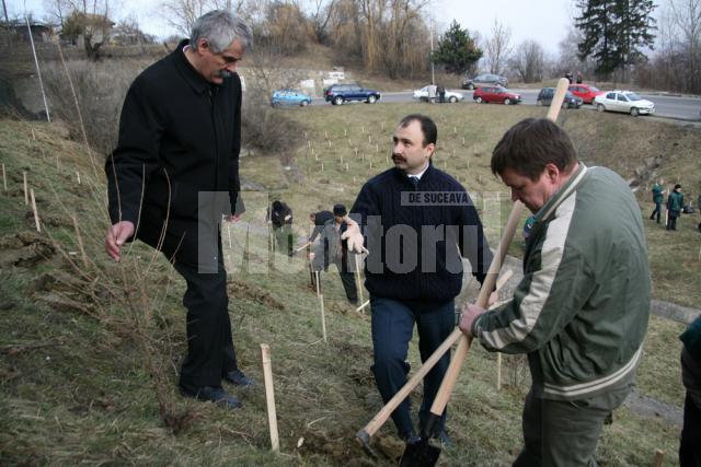 Silvicultorii de la conducerea instituţiilor sucevene, Costel Girigan, Sorin Popescu şi Sorin Ciobanu, voluntari la plantarea de arbori
