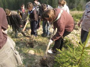 Acţiune: Deal de lângă Mănăstirea Putna, plantat cu puieţi de cercetaşii suceveni