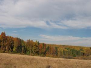Pădurea ce înconjoară satul Dragomirna oferă un peisaj încântător