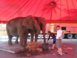 Elefanţii Carla şi Rani au ajuns la Suceava