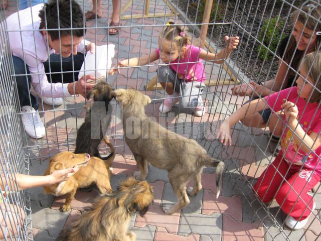 Târgul de adopţii de animale de companie