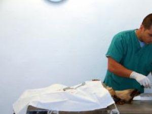Câine comunitar, pe masa de operaţie
