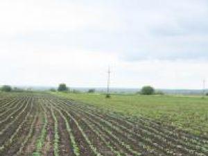 Proiecte: Oficiul de Cadastru începe intabularea gratuită a terenurilor