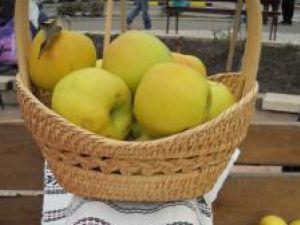 Producţia record de mere de la Fălticeni nu are piaţă de desfacere