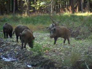 Spaniolii sunt atraşi de faptul că în România vânătoarea se face ca pe vremuri
