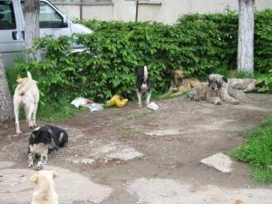 Mii de câini din municipiul Suceava, dar şi din localităţile din jur, vor fi sterilizaţi