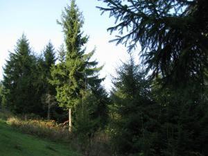 Procesul privind retrocedarea celor 192.000 de hectare de pădure începe să se apropie de sfârşit