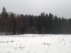 Decizia de retrocedare a peste 166.000 de hectare de pădure a fost dată de aproape două săptămâni, dar punerea în posesie nu s-a făcut încă