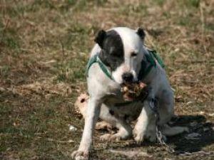 Unul dintre câinii ucigaşi de la Rotunda