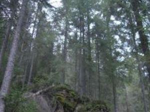 Controale în pădure