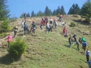 Elevii din Vatra Moldoviţei au plantat 2.000 de arbori