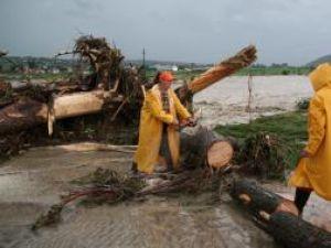 Copaci smulşi din rădăcini, aduşi de puhoaie pe DN 2, la intrarea în Pătrăuţi
