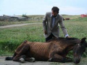 Calul încerca din când în când, cu ultimele puteri, să se ridice, însă se prăbuşea din nou după câteva secunde