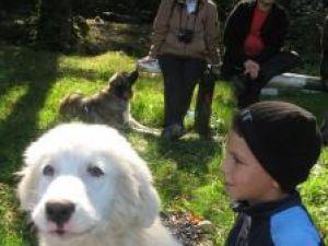 Câini ciobăneşti din România, la poalele pădurii Ilişeşti