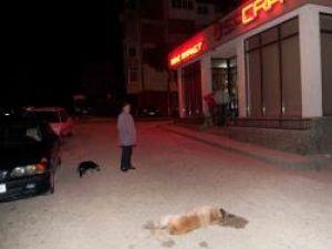 Câine otrăvit la intrarea în cartierul Obcini