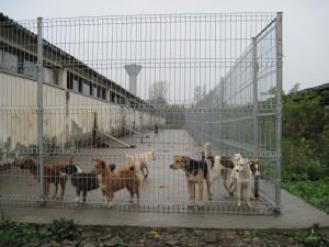 Adăpostul pentru câini fără stăpâni, situat la ieşirea din Rădăuţi spre comuna Dorneşti, modernizat