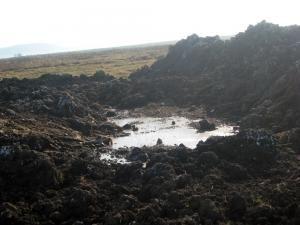 Locul în care, bănuiesc autorităţile, sunt îngropate alte câteva tone de deşeuri animaliere