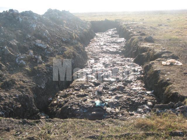 Şanţ lung de aproximativ 50 de metri şi adânc de cel puţin cinci, şanţ în care erau aruncate tone de resturi de animale, organe, copite şi capete de cai