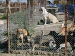 În afara celor 2.000 de câini de pe străzi, în adăpostul din lunca Sucevei mai sunt cam 1.200 de câini