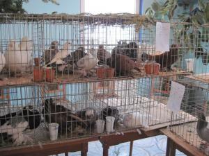Expoziţia a reunit două sute de porumbei de valoare