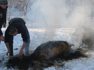 Tăiatul porcului, de Ignat