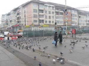 Trotuarul şi jumătate din strada Ştefan cel Mare, îngrădite cu gard de protecţie