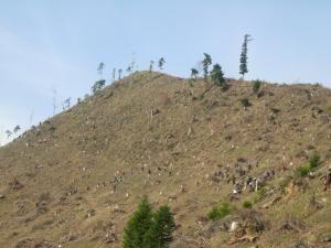 În judeţ, terenurile degradate, afectate de eroziune, ocupă aproximativ 12.800 ha