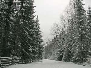 Suspansul în privinţa celor 166.813 hectare de pădure va mai continua alţi câţiva ani