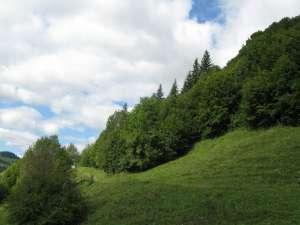 Pădurile Sucevei