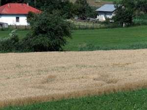 Locul în care grâul nu creşte pe anumite porţiuni de teren