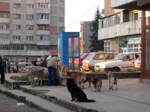 În majoritatea cazurilor ajunse la spital este vorba de victime ale câinilor comunitari