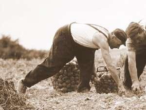 """""""Pentru o recoltă bogată"""""""
