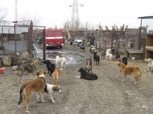 Adăpostul de câini suprapopulat din lunca Sucevei
