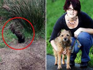 Coşmarul unui terrier care a stat îngropat 20 de zile Foto: Mediafax