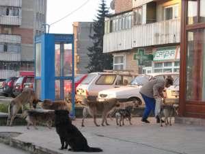 Sucevenii vor fi cei care vor decide ce se va întâmpla cu câinii de pe străzile municipiului