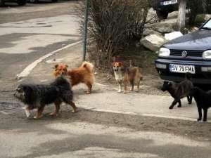 Soarta câinilor vagabonzi va fi decisă prin consultarea publică a locuitorilor Sucevei